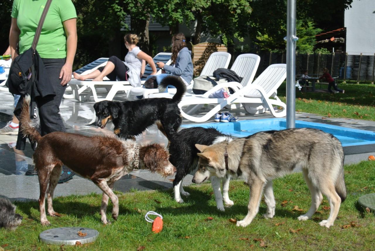 züchterseminar hund 2017